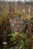 Spinnennetz. Stockfoto