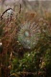 Spinnennetz. Lizenzfreie Stockbilder