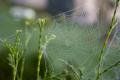 Spinnennetz Lizenzfreies Stockfoto