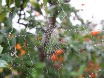 Spinnennetz stockbilder