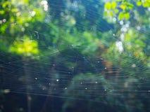 Spinnennetz auf dem Baum im Wald mit Sonnenlicht Lizenzfreies Stockfoto