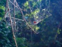 Spinnennetz auf dem Baum im Wald mit Sonnenlicht Lizenzfreie Stockbilder