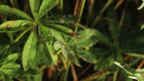 Spinnennetz auf einem Hintergrund von Grünpflanzen stock footage