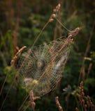 Spinnennetz auf Gras Lizenzfreie Stockbilder