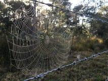 Spinnennetz auf Stacheldraht mit Morgentau Lizenzfreies Stockbild
