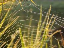 Spinnennetz auf Wiese Lizenzfreie Stockfotos