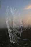 Spinnennetz bei Sonnenaufgang Stockfotografie