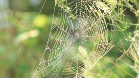 Spinnennetz, das auf dem Wind rüttelt stock video