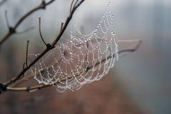 Spinnennetz in den Regentropfen Stockbild