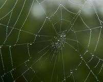 Spinnennetz in den Tautropfen Lizenzfreie Stockfotos