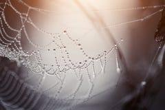 Spinnennetz in den Tautropfen Lizenzfreies Stockfoto