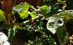 Spinnennetz in der Bürste Stockfotografie