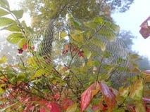 Spinnennetz am Fall stockbilder