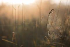 Spinnennetz-früher Morgen in Autumn Meadow stockfotos