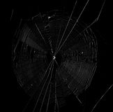 Spinnennetz im dunklen Hintergrund Stockbilder