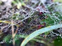 Spinnennetz im Gras im Wald lizenzfreies stockbild