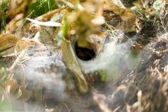 Spinnennetz im Park in der Natur Stockbild