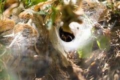 Spinnennetz im Park in der Natur Stockfotografie