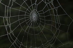 Spinnennetz im Wald Lizenzfreies Stockbild