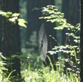 Spinnennetz im Wald stockfotografie