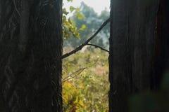 Spinnennetz im Wald, Spinne Stockfotografie