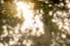 Spinnennetz Insekt im Wald Lizenzfreie Stockbilder