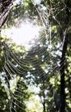 Spinnennetz mit Blitz in der Rückseite Stockfotografie