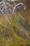 Spinnennetz mit buntem Hintergrund, Spinnennetz mit Wasser fällt Stockbild