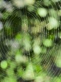 Spinnennetz mit einem dunkelgrünen Hintergrund und unscharf stockbild