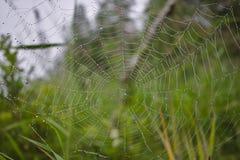 Spinnennetz mit Regentropfen Stockfotografie