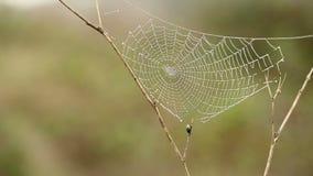Spinnennetz mit Regentropfen stock video footage