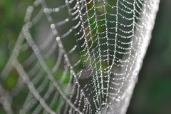 Spinnennetz mit Tau Lizenzfreie Stockfotografie
