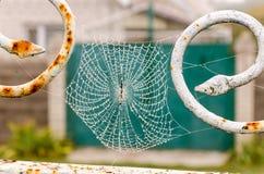Spinnennetz mit Tautropfennahaufnahme lizenzfreie stockfotos