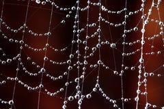 Spinnennetz mit Wassertropfen Stockbilder