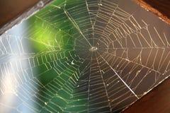 Spinnennetz nah oben in zerstreutem leicht- selektivem Fokus, Kopienraum Lizenzfreie Stockfotos