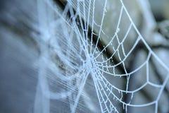 Spinnennetz umfasst mit Frost Stockfotografie
