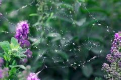 Spinnennetz und rosa Blumen Stockbilder