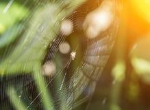 Spinnennetz- und Spinnenunschärfehintergrund stockfotos