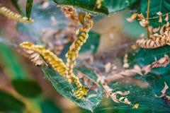 Spinnennetz Weiche blaue Tönung stockfotografie