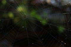 Spinnennetz wird in den Bergen gefunden stockbilder