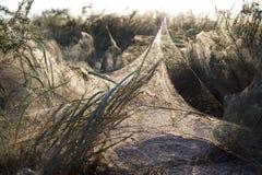 Spinnennetzanlagen Stockfotografie