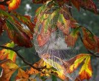 Spinnennetze Stockfotografie