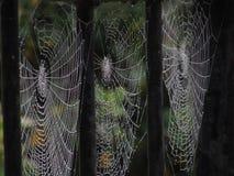 Spinnennetze stockbild