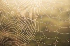 spinnennetze Lizenzfreies Stockfoto