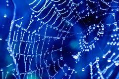 spinnennetze lizenzfreie stockbilder