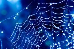spinnennetze lizenzfreie stockfotografie