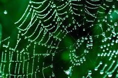 spinnennetze lizenzfreie stockfotos
