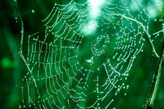 spinnennetze Stockfotos