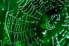 spinnennetze Stockbilder