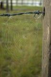 Spinnennetze auf altem Zaun stockfoto